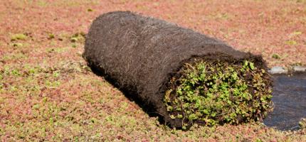 Pre-grown sedum mats